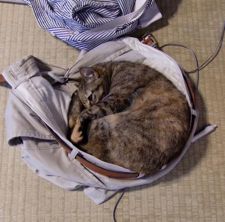 猫社長近影.jpg